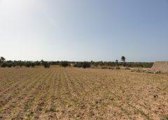استرجاع حوالي 32 هكتارا من الأراضي في باجة